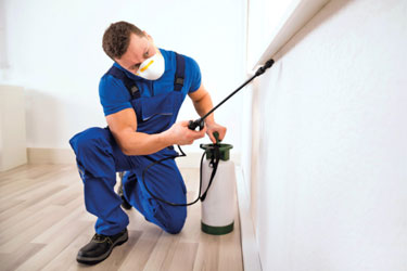 Pest Control for Villas