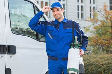 Cheapest Pest Control Jebel Ali