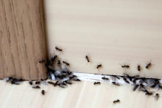 9 Spring and Summer Pest Prevention Tips