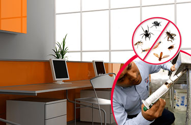 Office Pest Control In Dubai